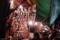浅草寺羽子板市 2009-12-19 17:36:48