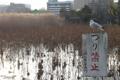 [野鳥]不忍池にて 2010-01-22 15:37:49