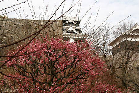 2010-02-08 熊本城の梅