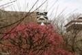 [熊本][城]2010-02-08 熊本城の梅