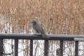[東京][野鳥]不忍池 2010-02-21 11:29:30