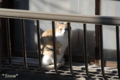 [猫]2010-03-11 08:10:45 東京都文京区