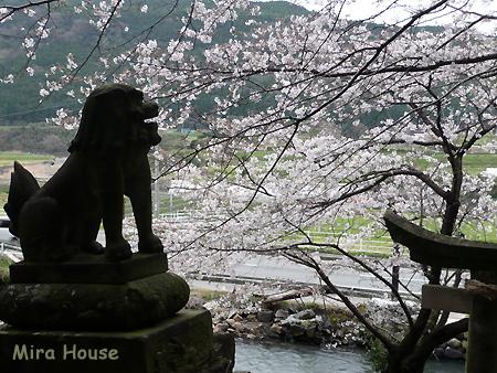 2009-03-21 17:45:36 熊本県