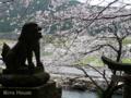 [熊本][桜]2009-03-21 17:45:36 熊本県