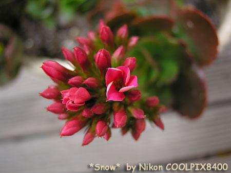 f:id:Snowowl:20100329213551j:image