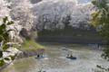 [東京][桜]2010-04-03 15:32:20 千鳥ヶ淵