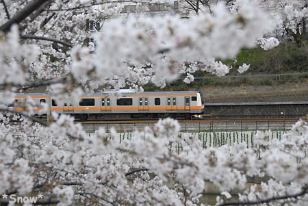 2010-04-03 16:27:16 中央線と外堀の桜