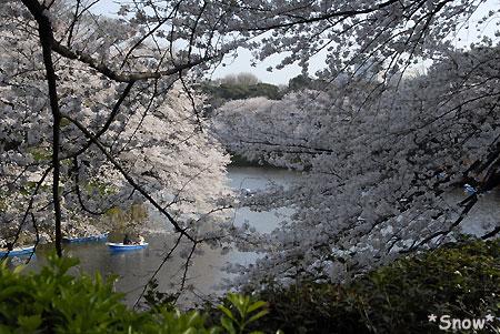 2010-04-03 15:47:43 千鳥ヶ淵