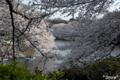 [東京][桜]2010-04-03 15:47:43 千鳥ヶ淵