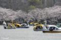 [東京][桜]不忍池 2010-04-06 13:37:00