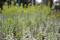 2010-04-13 16:57:44 葉牡丹