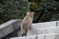 [猫]2010-04-17 16:26:19 東大本郷キャンパスにて