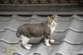 [猫]文京区 2010-03-16 14:43:07
