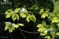 [植物]根津神社にて 2010-05-13 11:14:05