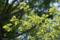 根津神社 2010-05-13 11:14:31