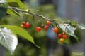 [植物]藍染大通りにて 2010-05-13 11:35:46