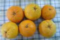 [果物]甘夏(2010-05-14)