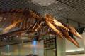 [東京][博物館]国立科学博物館 2010-05-15