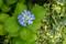 紫陽花 2010-06-08 10:46:44