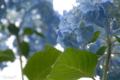 府中市郷土の森 2010-06-09 14:12:31