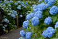 [花]府中市郷土の森博物館 2010-06-09 14:15:12