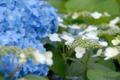 [花]府中市郷土の森博物館 2010-06-09 14:14:19