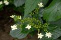[花]府中市郷土の森博物館にて 2010-06-09 14:10:50