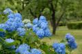 [花]府中市郷土の森博物館 2010-06-09 14:16:05