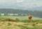 阿蘇の赤牛 2010-07-31 11:29:27