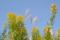 セイタカアワダチソウとススキ 2005-10-09 16:03:08