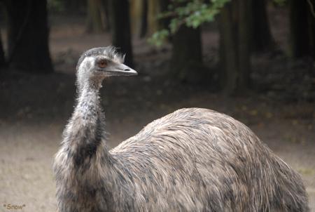 富士宮花鳥園 2010-09-03 14:11:48