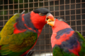 [鳥]富士宮花鳥園 2010-09-03 14:06:50