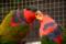 富士宮花鳥園 2010-09-03 14:06:50