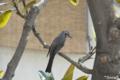 [野鳥]2010-04-17 15:14:41