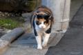 [猫]文京区根津 2010-11-03 15:01:10