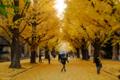 [東京][街角][紅葉]東大安田講堂前 2010-12-05 15:07:30