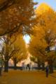 [東京][街角][紅葉]東大安田講堂前 2010-12-05 15:15:00