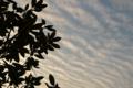 [空][雲][夕焼け]2011-01-11 16:18:33