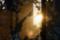 夕陽 2011-01-14 16:06:05