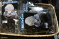 [博物館]隕石おかき 2011-01-23 14:17:41