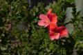 [園芸][花]エンジェルアイズ・オレンジ 2011-03-16 13:37:35