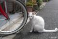 [猫]文京区根津 2010-04-14 10:58:26