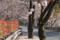 [熊本]熊本城 2011-03-25 15:51:20