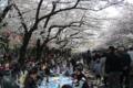 [東京]上野公園 2011-04-10 14:231:7