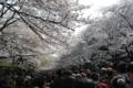 [東京]上野公園 2011-04-10 14:22:16