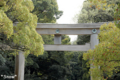 [東京][街角]明治神宮 2010-04-13 14:35:12