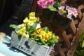 [東京][街角]2011-04-28 11:34:16