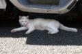 [猫]タロちゃん 2011-04-28 11:56:44