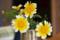 春菊の花 2011-06-06