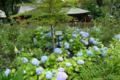[東京][神社]神田明神庭園 2011-06-12 16:03:35